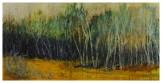 Birch-Tree-Line-24'x48'_1
