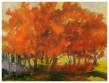 Orange-Trees-30'x40'_1